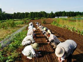 Seedning
